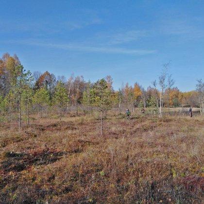 16.10.2019. Apauguma novākšana pērejas purvā Ildzenieku ezera krastā